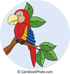Macaw cartoon