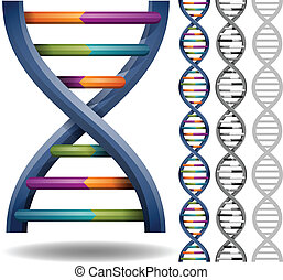 DNA isolated on a white background.
