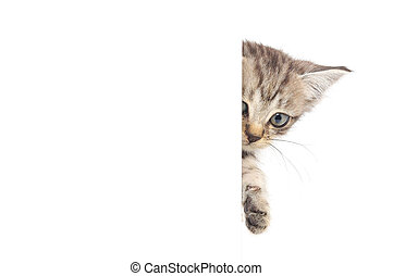 kitten - Kitten hanging over blank posterboard, you add the...