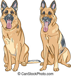 vetorial, cor, Esboço, cão, alemão,...