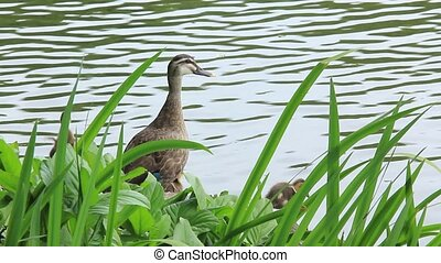 duck - I took the state that the mother and child of the...