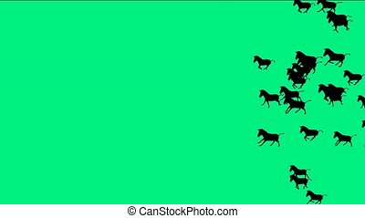 a group of horses silhouette running with green screen.