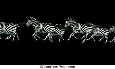 a group of zebra running