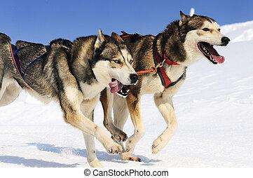 esportiva, cachorros