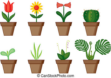 Window plants - A different set of potted flowers in pots