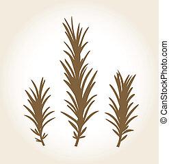 Retro stylized rosemary stub isolated on white - Rosemary...
