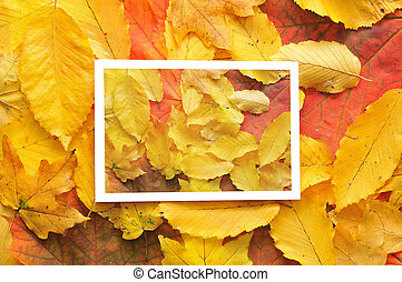 autunno, cornice, Foglie