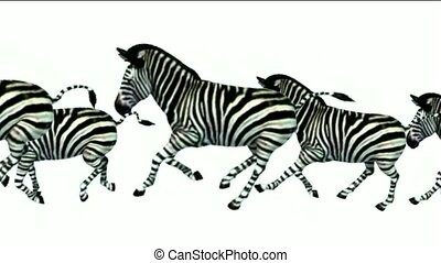 a group of zebra running.