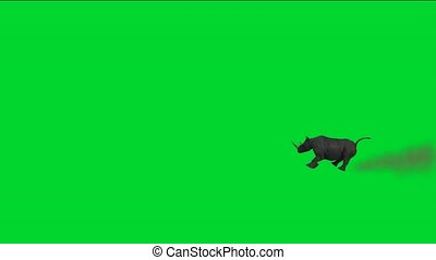rhino running with dust against green screendust,