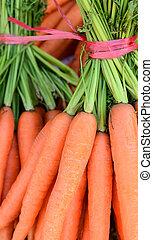 Carrots close up