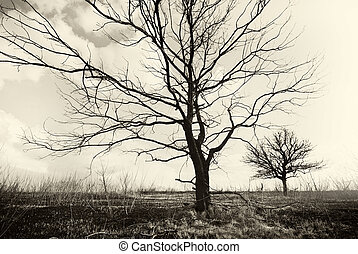 Lonely dead trees. Art nature.