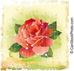 vintage illustration of red rose