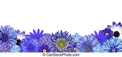 Selection of Various Blue Flowers at Bottom Row Isolated on...