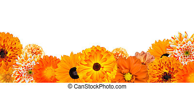 Selection of Various Orange Flowers at Bottom Row Isolated -...