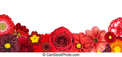 Selection of Various Red Flowers at Bottom Row Isolated on...