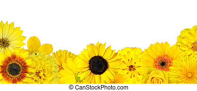 Selection of Yellow Flowers at Bottom Row Isolated on White....