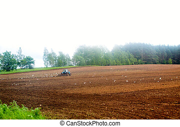 Tractor harrow at the field. Birds flying around