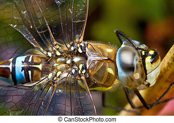Dragonfly scratching his eye