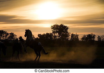 Sunset horses silhoutte