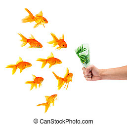 Goldfishes with money on a white background