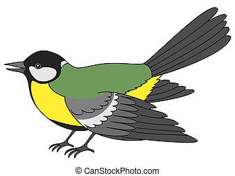 Bird a titmouse, isolated