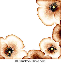 Grunge poppy border - Grunge poppy, floral natural brown...