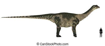 Antarctosaurus Size Comparison
