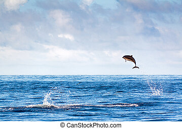 Jumping dolphin - Dolphin jumping high out of the water at...