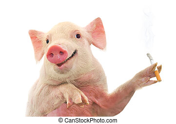Pig Smoking Cigarette. Isolated on white.