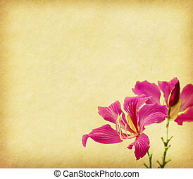 bauhinia flower on Grunge Abstract Background