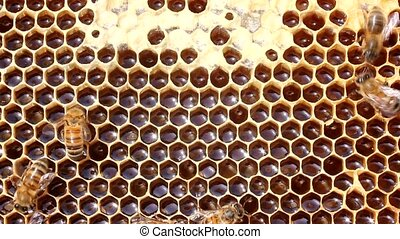 insects, bees, food, pollen, collec