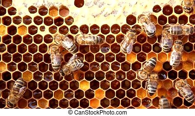 insects, bees, food, pollen, collec - Bees convert nectar in...