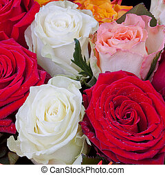 several many-colored roses close up
