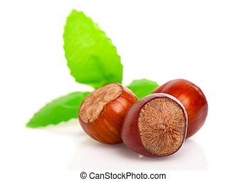 hazelnut over a white background