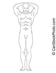 naked man in the full-length vector - naked man in pose of...