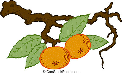 drawn tangerine with leaves on a branch