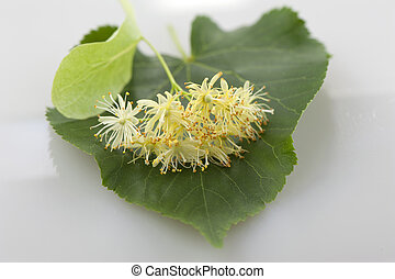 Linden flowers on a green leaf close-up
