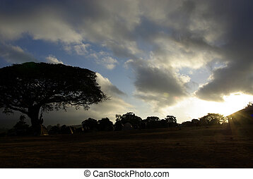Camping site in savanna at dusk