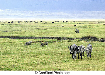 Savanna scene - Picture of a typical savanna scene