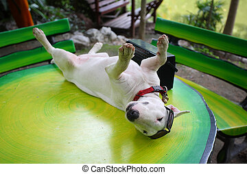 funny dog relaxing.