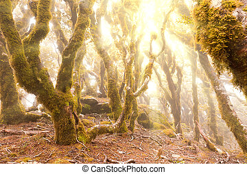 Virgin mountain rainforest of Marlborough, NZ - Morning sun...