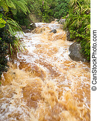 Flash flood in West Coast creek, NZ South Island - Flash...