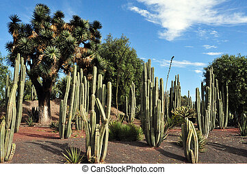 Mexican cactus in the desert of Mexico..
