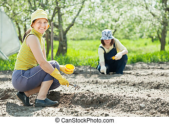 women works at vegetables garden - Two women works at...