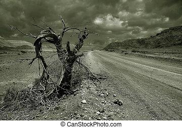Dead tree. Arava desert, Israel. - Old dead tree on the...