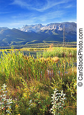 Valley Lake Jasper, overgrown with tall grass. Sunny morning...