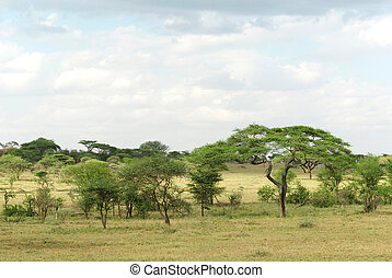 Typical Serengeti landscape - Picture of a typical Serengeti...