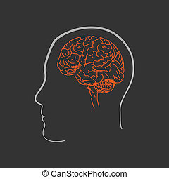 Sketched Human Brain - Sketched illustration on the human...