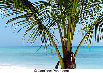 Palm tree in front of turquoise lagoon