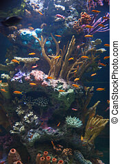 Aquarium with tropical fish and coral reef in sunlight